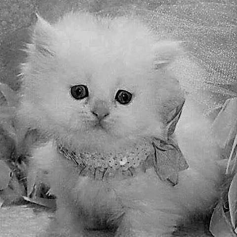 Tak tam dáme koťátko, aneb zákazníka přece není třeba řešit.